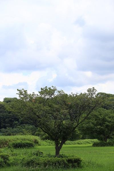 AA4I3604.JPG