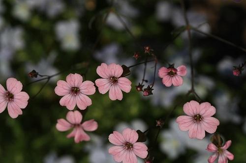 なんとなく花.JPG