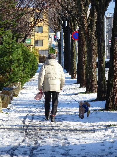 日差しで散歩.JPG