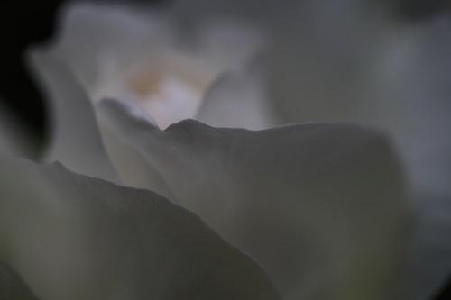浮雲0.JPG