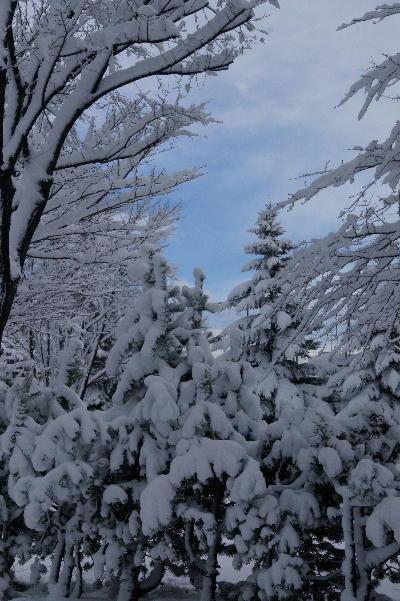 雪の後に.JPG