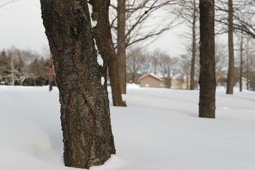 雪原の小さな小屋.JPG